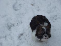 Śniegowy pocisk