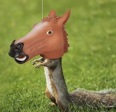 Horse head squirrel feeder. Probably the funniest way to feed anything. -D