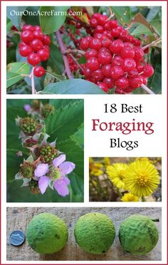 18 Best Foraging Blogs - & an awesome foraging board: http://www.pinterest.com/susanlawrence1/off-the-grid-foraging-see-all-my-off-the-grid-boar/
