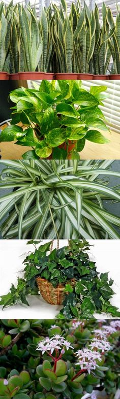 Cinque resistenti piante da appartamento