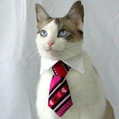 Gato ejecutivo