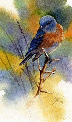 Joe Garcia WATERCOLOR Western Bluebird