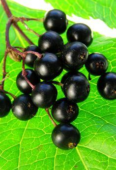#Grape Seed #Turmeric #Schizandra