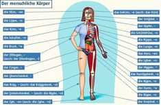 Body parts - German German Grammar, German Words, Learn German, Learn English, German Resources, Vocabulary Builder, Language Acquisition, German English, German Language Learning
