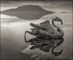 In the lake is called Lake Natron, all animals were submerged in the lake water will turn to stone. #Tanzania, East Africa. #Lake Natron