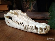 Australian Saltwater Crocodile replica by NightshadeFX on Etsy