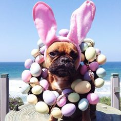 Happy Easter!!! Henrile, the French Bulldog, by henrilefrenchie instagram