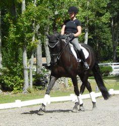 Rubina Bella- 3rd Level, German Hanoverian mare
