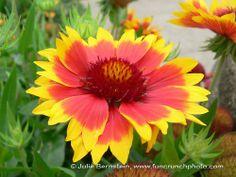 Alta Plaza flower | Flickr: Intercambio de fotos