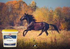 Sectolin Fenegriek kg Horse Supplies, Horses, Animals, Animales, Animaux, Animal, Animais, Horse