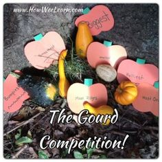 The Great Gourd Competition! Ways for wee ones to learn about comparing, sorting, and competing!