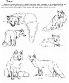 Part Page 1 of the toturial The fox at the top left is draw from picture of the real animal. Here's the pic [link] All credit for the fox drawing ref. Fox Toturial: Pg 1 of Part 2 Pencil Drawings Of Animals, Animal Sketches, Fox Drawing, Drawing Sketches, Drawing Ideas, Fox Anatomy, Fox Sketch, Fuchs Tattoo, Sunflower Drawing