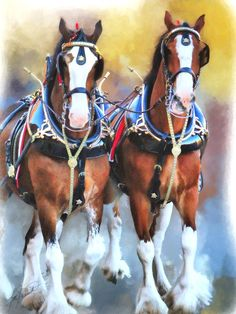 """Budweiser Clydesdales"" by Tom Schmidt, oil on canvas, 2010 Horse Pictures, Pictures To Draw, Horse Photos, Pretty Horses, Beautiful Horses, Clydesdale Horses Budweiser, Horse Artwork, Work Horses, Draft Horses"