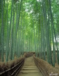 Image result for arashiyama