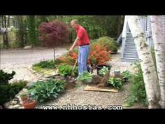 How To Divide & Propagate Your Hostas