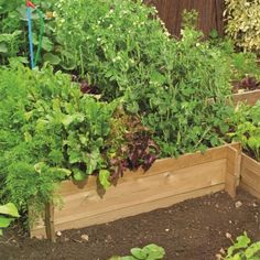 raised vegetable beds This would be good for my mother
