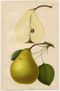 El maravilloso encanto de las láminas con ilustraciones botánicas. …