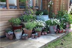Place plants in containers outside your rented house. Place plants in Small Backyard Gardens, Back Gardens, Small Gardens, Outdoor Gardens, Container Plants, Container Gardening, Patio Plants, Garden Pots, Potted Garden