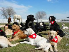 Service and Seeing Eye Guide Dogs Paired With and Provided Free of Charge to Children and Adults in Quebec through the Non-Profit The MIRA Foundation ♥️🐾 Chien Mira, Dog Search, Images And Words, Guide Dog, Working Dogs, Dog Cat, Foundation, Children, Cats
