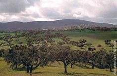 paisagem portugal - Google zoeken