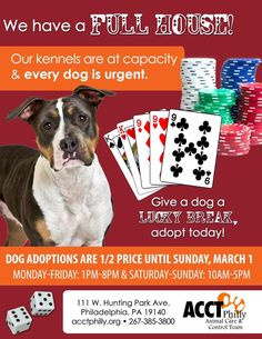 Kennels are full and all dogs are urgent!! Please share! @ACCTPhilly