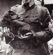 american-soldier-takes-dachshund-to-america