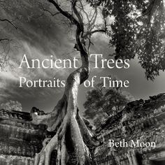 Beth Moon : Ancient Trees Portraits of Time