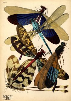 Treasures-Dragonflies-Insects-Art Nouveau- Art Deco-1930-wings of a dragonfly.