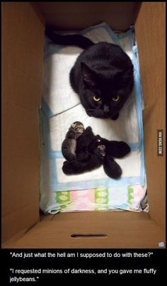 Cats and kittens are so funny and cute animals, they are simply the best! Just look how all these cats & kittens play, fail, get along with dogs, get their Funny Animal Jokes, Funny Cat Memes, Cute Funny Animals, Animal Memes, Cute Baby Animals, Funny Cute, Funniest Memes, Super Funny, Funny Animal Pictures