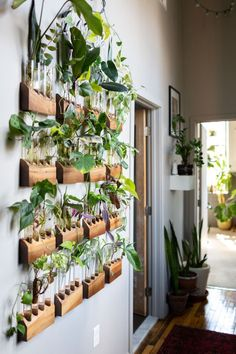 , The Plant Doctor's home tour is definitely full of plants and tons of unique ideas for displaying indoor plants in the home. We love the plant wall ha. , The Plant Doctor's Baltimore Home and Studio Are Absolutely Filled With Gorgeous Green Plants Easy House Plants, House Plants Decor, Plants In The Home, For The Home, Hanging Plant Wall, Diy Hanging, Plant Wall Decor, Hang Plants On Wall, House Plants Hanging