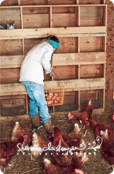Not meant to be funny...but couldn't help but laugh at the cat photobomb in the chicken coop.