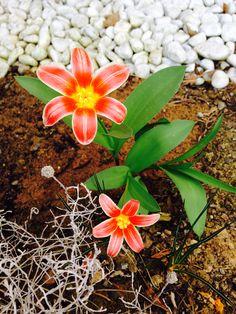 Plants, Pictures, Plant, Planets