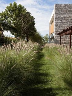 American Society of Landscape Architects' 2014 Best Residential Garden Winners Brazilian ironwood trees and ornamental grasses soften the property's bold façade.Brazilian ironwood trees and ornamental grasses soften the property's bold façade.