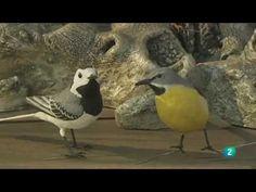 Cuaderno de Gaia 16º  Aves urbanas, reconocimiento y curiosidades