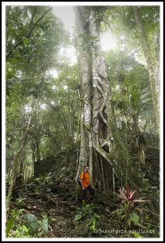Visita A La Reserva Gandoca-Manzanillo, Costa Rica