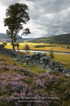 Near Braemar, Aberdeenshire, Scotland, UK. Overlooking the River Dee. In the Cairngorms National Park.