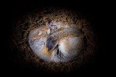 Hibernation, by Ingo Arndt