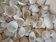 beachcomber white shells