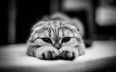Wallpaper : nose, whiskers, eye, kitten, black and white, monochrome photography, vertebrate, close up, cat like mammal, macro photography, small to medium sized cats 1920x1200 - - 117440 - HD Wallpapers - WallHere