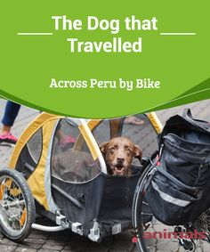 The Dog that Travelled Across Peru by Bike  While traveling is spectacular, usually it's impossible to bring ourpets.The long journeys and some places that we travel to can be so risky for our little animals that it's usually best not to bring them with us. Nevertheless,we'll share the story of an owner who decided to bring his dog to visit Peru.