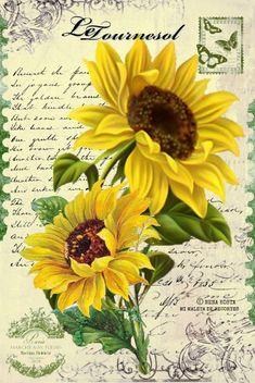 5c771ecdea0c3edee3a96ec8bf5791ed--postcards-butterflies.jpg (513×767)