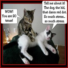 SO much stress! You need a massage. You DESERVE a massage. You need to schedule a massage. Funny Massage Quotes, Massage Funny, Face Massage, Cute Cats, Funny Cats, Funny Animals, Cute Animals, Adorable Kittens, Animal Funnies
