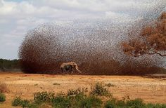 """This is a locust swarm. They are grasshoppers, that have matured enough to grow wings, for food, flight and mainly to lay eggs over vast areas. They eat EVERYTHING in site that is a plant. Females have 2 """"spike"""" areas at the back-end of their abdomen. They use these to dig holes and deposit eggs. Then, inches away, they repeat the process. They are high reproducers. Their flight can be seen from space as hordes take wing. When they sprout wings, then, they are called locusts."""