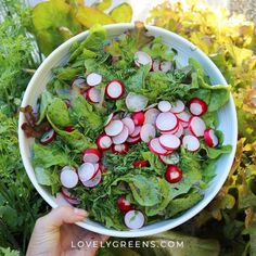 Carrot Seed and Rose Body Butter Recipe -- Lovely Greens Kahlua Recipes, Soap Recipes, Lavender Soap, Lavender Honey, When To Harvest Potatoes, How To Propagate Lavender, Rhubarb Gin, Scented Geranium, How To Make Rose