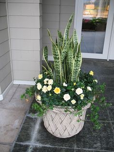 Porch Plants, House Plants Decor, Plant Decor, Indoor Plants, Container Flowers, Container Plants, Container Gardening, Garden Yard Ideas, Garden Art