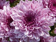 Macro, Close, Blossom, Bloom