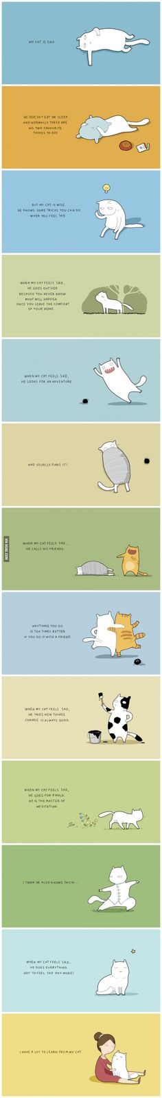 What to learn from a cat.  #illustration #storytelling