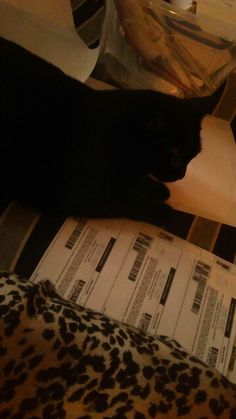 This is a mookie resting on my piles of coupons