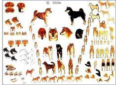 Les différentes robes et attitudes du Shiba Inu Japanese Dog Breeds, Japanese Dogs, Shiba Inu, Akita Dog, Mini Dogs, Dog Facts, Dog Tattoos, Beautiful Dogs, Dog Friends