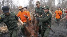 Lækkede papirer afslører skattelys rolle i skovrydninger | Nyheder | DR